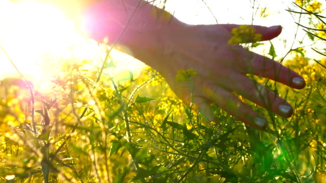 young woman hand passing through a wild meadow field. female hand touching wild flowers close-up - wildlife travel stock videos & royalty-free footage