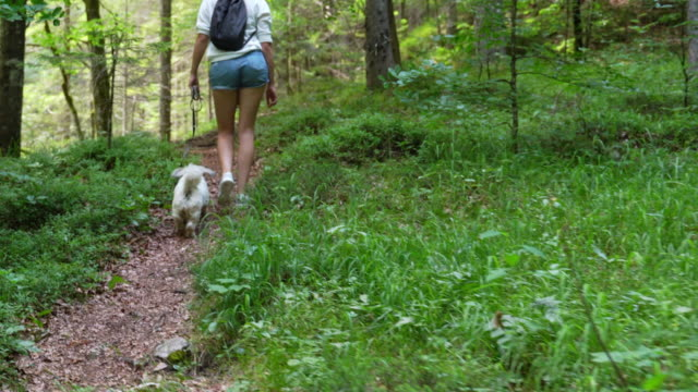 ung kvinna vandring i skogen med sin hund - hund skog bildbanksvideor och videomaterial från bakom kulisserna