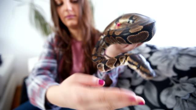 giovane donna che tiene il serpente - animale domestico video stock e b–roll