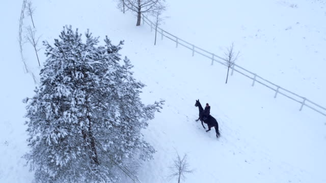 aerial: young woman horseback riding a horse in winter wonderland - stallone video stock e b–roll