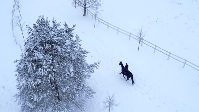 antenne: junge frau reiten ein pferd im winter-wunderland - hengst stock-videos und b-roll-filmmaterial