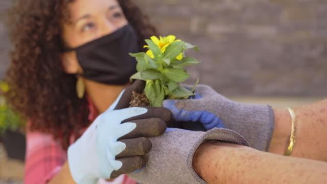 young woman in a backyard garden - gardening video stock e b–roll