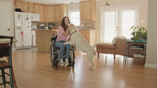 young woman in a wheelchair interacts with her dog - cane addestrato video stock e b–roll