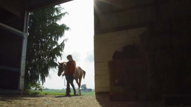 a young woman in her thirties leads her brown horse into a dark barn on a sunny day on a horse farm - cavallo purosangue video stock e b–roll