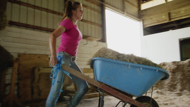 a young woman in her twenties picks up a hay bale from a haystack and puts it in a wheelbarrow in a barn on a farm - тяжёлый стоковые видео и кадры b-roll
