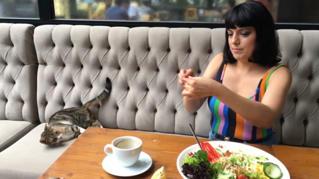 vídeos de stock e filmes b-roll de young woman in the sidewalk cafe (stray cat) - felino