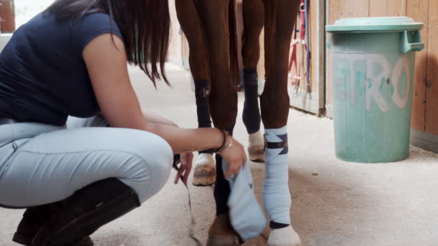 Young woman is removing bandage or polo wraps from a horse legs