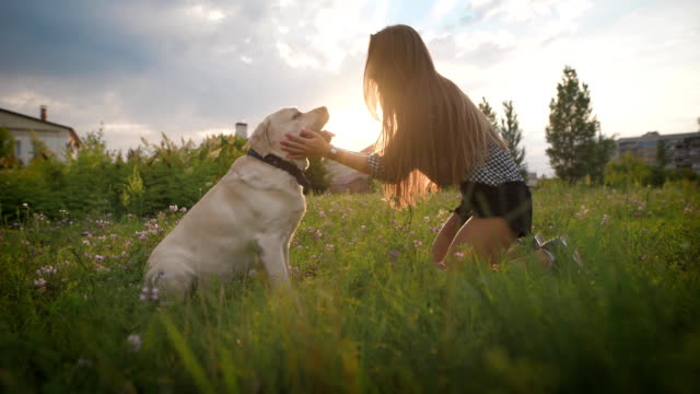 young woman is stroking dog face, looking at it and smiling, in blooming field in summer evening video