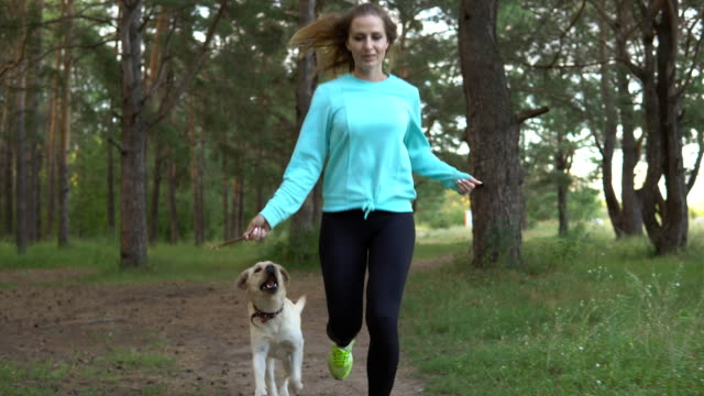 vídeos de stock e filmes b-roll de young woman is walking with dog in the forest - training