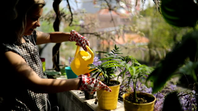 young woman is watering plants on terrace - terrazza video stock e b–roll