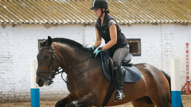 young woman jumps horse over an obstacle during her training in an arena - briglia video stock e b–roll