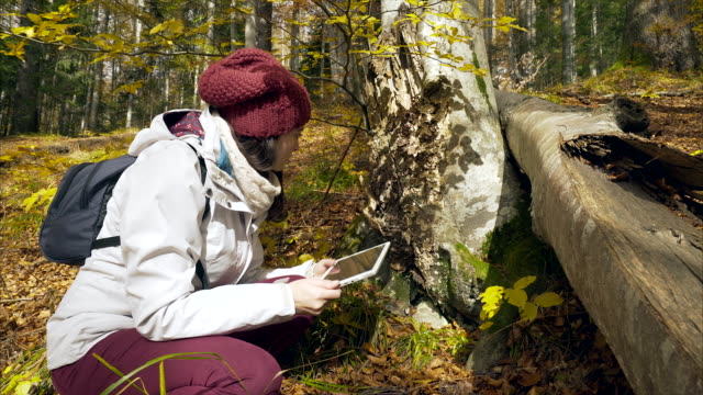 Young woman making research in nature. video