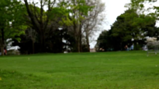 young woman on swing - endast unga kvinnor bildbanksvideor och videomaterial från bakom kulisserna