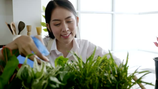 Young woman planting in the flower pots on a counter at home. video