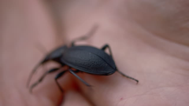 young woman playing with a large black beetle crawling on hands - эскапизм стоковые видео и кадры b-roll