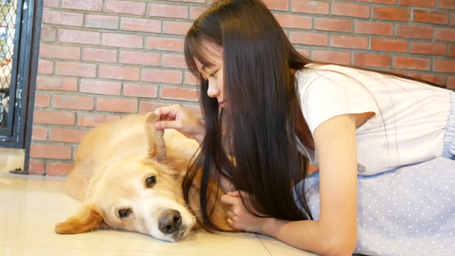 犬、ゴールデン ・ リトリーバーを演奏若い女性 ビデオ