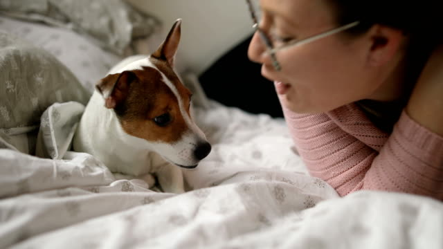 Young woman playing with her angry puppy Jack Russell terrier dog