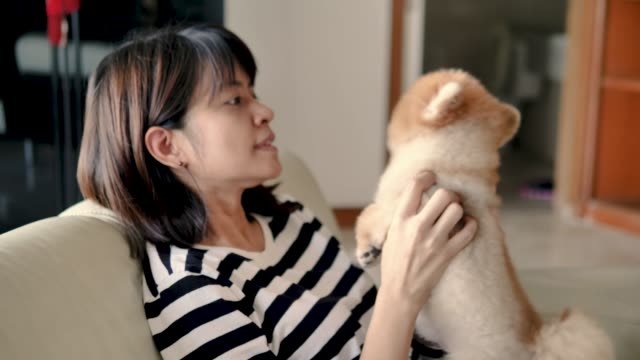 Young woman playing with new puppyin living room. video
