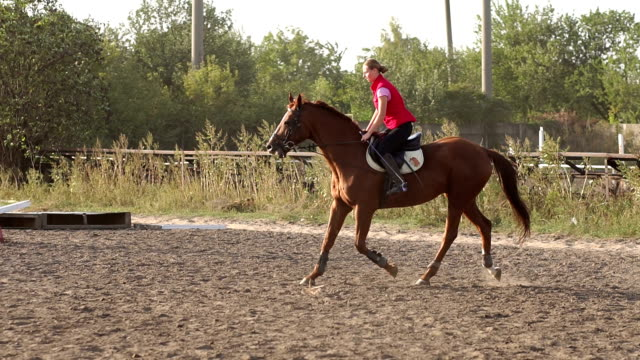 Young woman riding on a luxurious brown horse. video