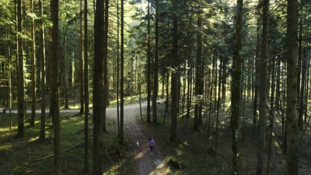 ung kvinna som springer genom skogen med sin hund - hund skog bildbanksvideor och videomaterial från bakom kulisserna