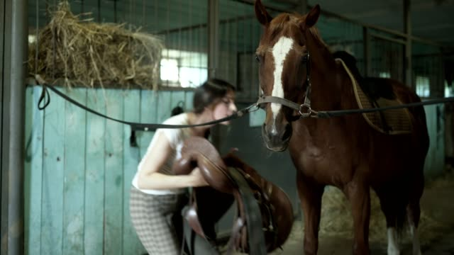 a young woman saddles her horse - sella video stock e b–roll