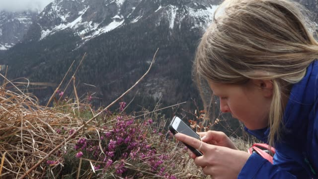 Young woman takes smart photo pic of alpine flowers
