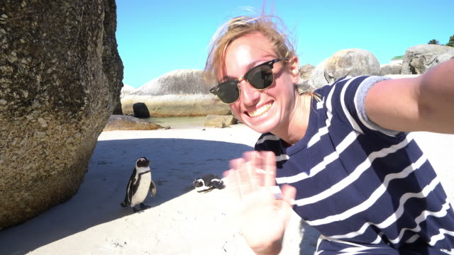 Young woman taking selfie portrait with African penguins video