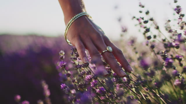 Young woman touching lavender flowers in farm