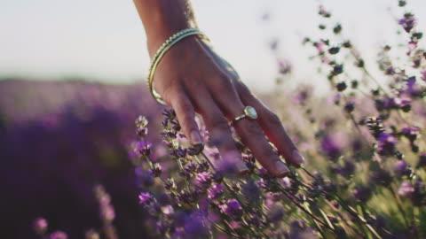 giovane donna che tocca i fiori di lavanda in fattoria - campo video stock e b–roll