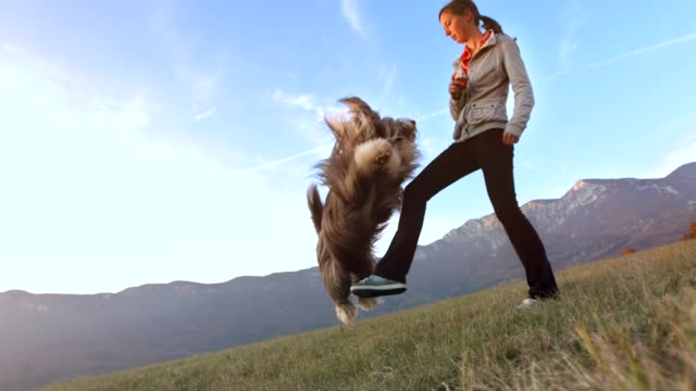 genç kadın eğitim onu köpek - mountain top stok videoları ve detay görüntü çekimi