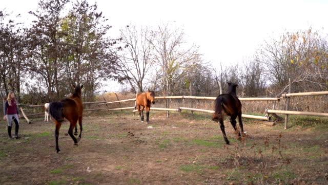 Young woman trains horses Young woman trains horses paddock stock videos & royalty-free footage