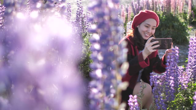Young Woman using Smart Phone for Taking Photo Lupine Flower in New Zealand