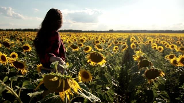 Young woman walking away in sunflower field video