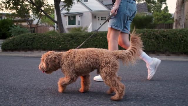 ung kvinna walking hennes hund - walking home sunset street bildbanksvideor och videomaterial från bakom kulisserna