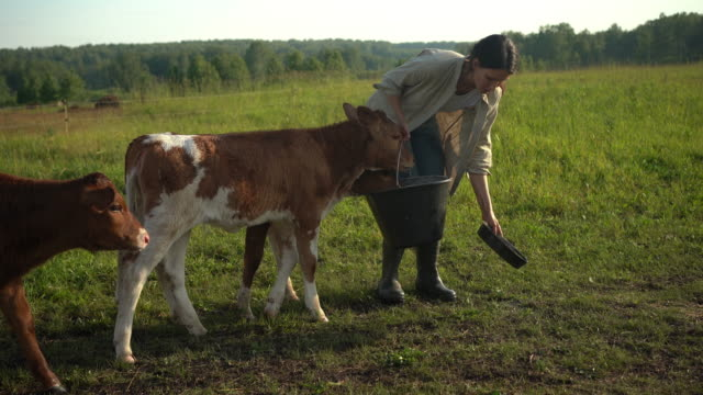 Young woman walks to feed calves. Farmer at countryside in summer.