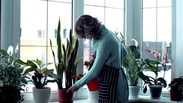 Young woman watering flowers inside home Side view of young blond woman in mint color long sweater watering flowers on window ledge inside home potted plant stock videos & royalty-free footage