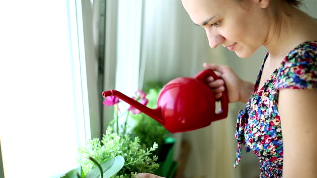 Young woman watering plants, steadicam shot Young woman watering plants, steadicam shot watering stock videos & royalty-free footage