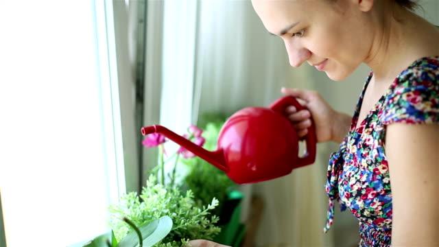 vídeos de stock e filmes b-roll de jovem mulher regar plantas, steadicam filmagem - lavanda planta