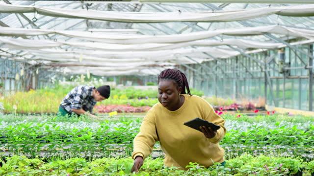 vídeos de stock e filmes b-roll de young woman working at plant nursery - estufa estrutura feita pelo homem