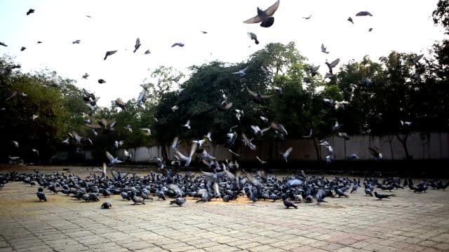Jovens mulheres voando pombos no parque - vídeo