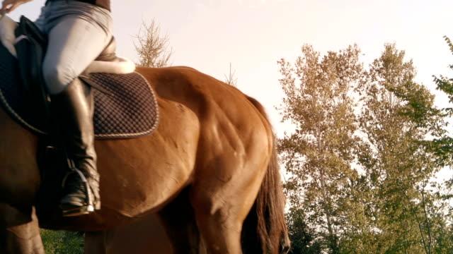 young women horse sunlight farm paddock slow motion - attività equestre ricreativa video stock e b–roll