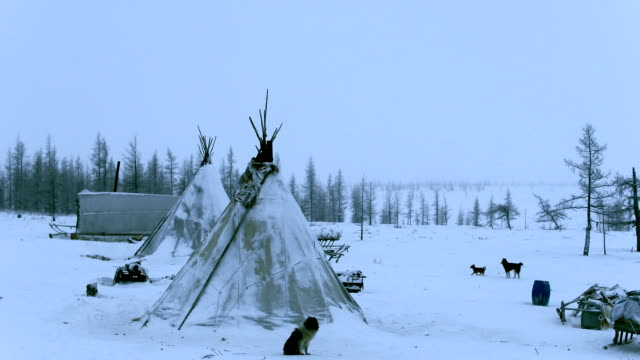 vídeos de stock e filmes b-roll de yurts of the reindeer herders - sibéria