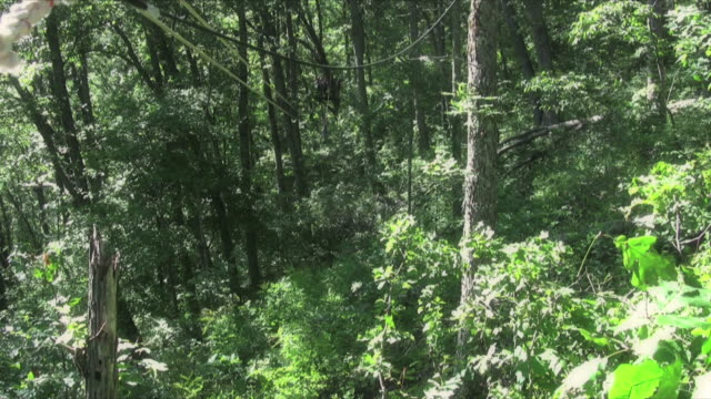 Zip Line Adventure Adventure on a zip line in the woods less than 10 seconds stock videos & royalty-free footage