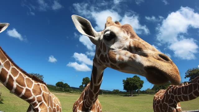 vídeos y material grabado en eventos de stock de zoo cerca de singapur. un animal gracioso. - animal