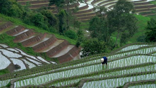 zoom in shot farmer working in rainy day - taras ryżowy filmów i materiałów b-roll