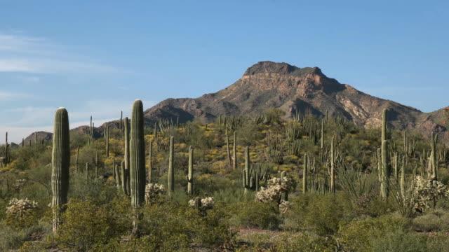 アリゾナ州のオルガン パイプ サボテン ・ ティロットソン ピークのショットでズームします。 - オコティロサボテン点の映像素材/bロール