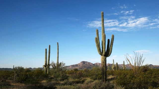 サボテンとプエルト ブランコ mnts ajo、アリゾナ州のショットでズームします。 - オコティロサボテン点の映像素材/bロール