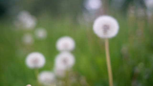 Zoom into a dandelion.