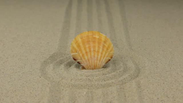 vidéos et rushes de zoom d'un coquillage magnifique couché dans un cercle de sable - coquillage
