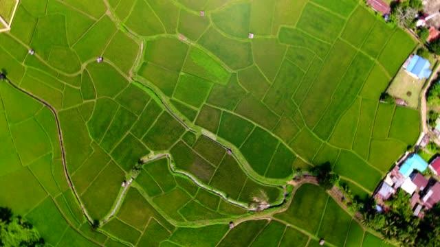 vidéos et rushes de zoom sur et rotation du tir. vue aérienne oiseaux yeux vue abattu sur un champ de riz. carte de la ferme de riz 4k dci - nervure